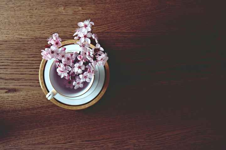 beautiful pink cherry blossom branch in cup